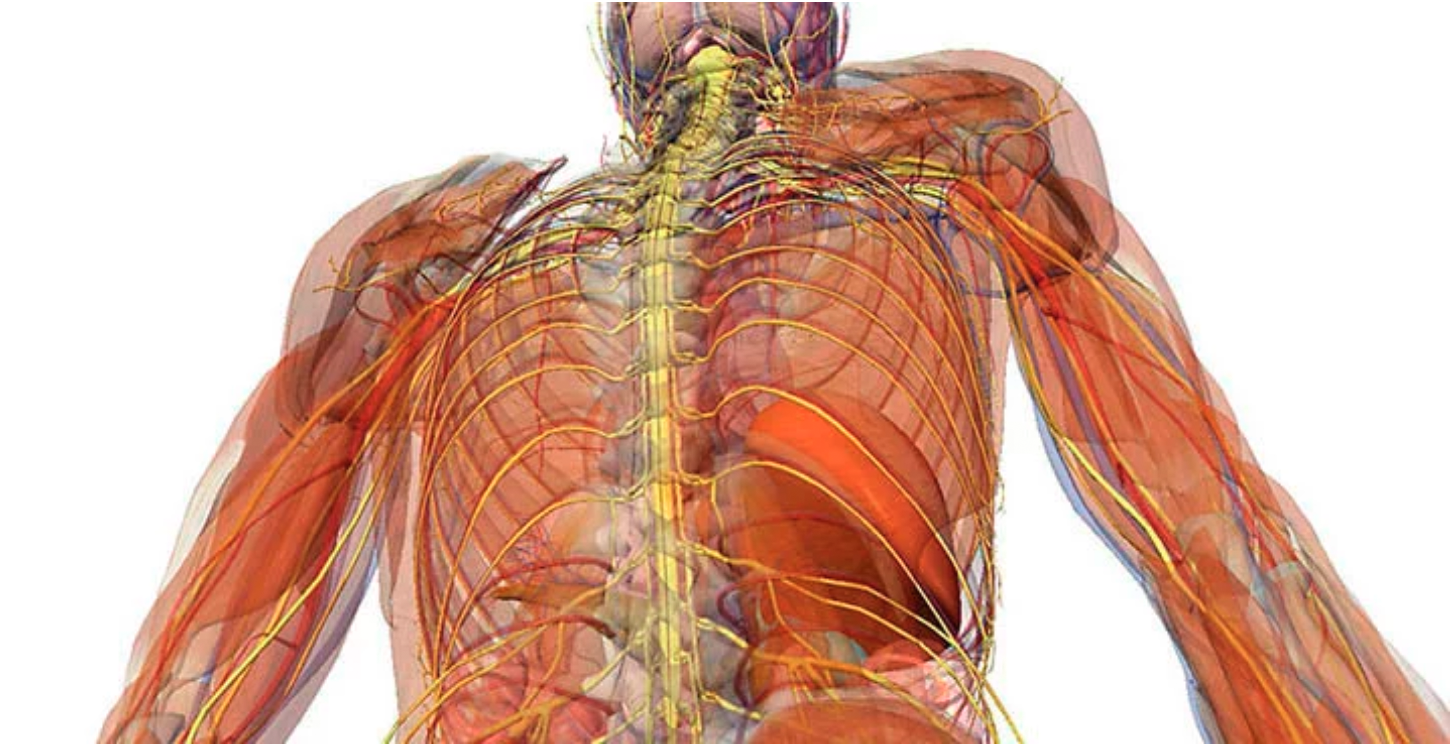 Vagus Nerve the Body Mind Connection - Global Recharge
